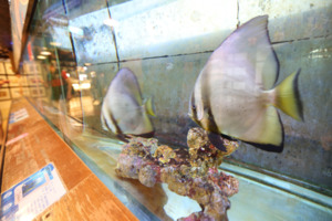ChiHsin Dry Bonito Museum<br />