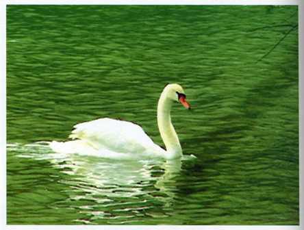 愛摩拉湖高貴的野生影像展